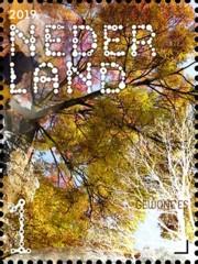 Beleef de natuur - bomen & bladeren - 5. gewone es