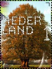 Beleef de natuur - bomen & bladeren - 8. linde