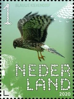 Beleef de natuur - roofvogels en uilen - blauwe kiekendief