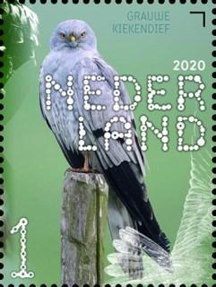 Beleef de natuur - roofvogels en uilen - grauwe kiekendief