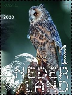 Beleef de natuur - roofvogels en uilen - ransuil