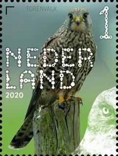 Beleef de natuur - roofvogels en uilen - torenvalk