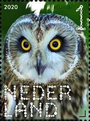 NVPH 3815 - Beleef de natuur - roofvogels en uilen - velduil