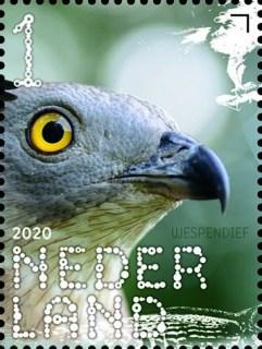 Beleef de natuur - roofvogels en uilen - wespendief