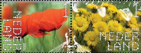 Beleef de natuur - De Onlanden - grote klaproos en klein hoefblad