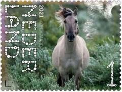 Beleef de Natuur - Duin en Kruidberg - konikpaard