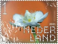 Beleef de Natuur - Duin en Kruidberg - parnassia