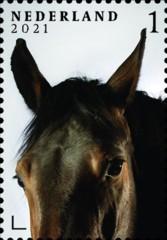 Nederlandse paardenrassen [7] - Legende