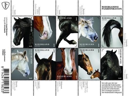 Nederlandse paardenrassen