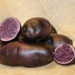 Blue Congo Seed Potato