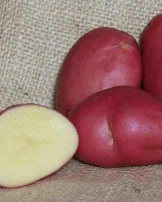 Desiree Seed Potatoes