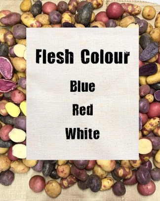 Flesh Colour