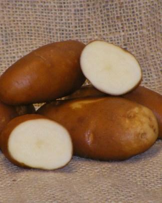 Golden Wonder Seed Potatoes