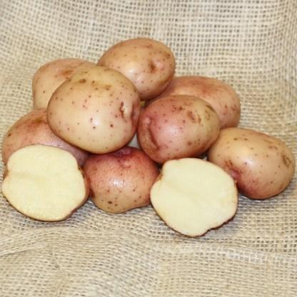 Kerrs Pink Seed Potato