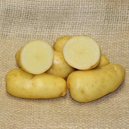 Sarpo Kifli Seed Potatoes