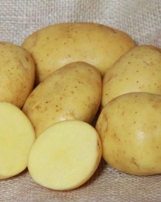 Linda Seed Potatoes