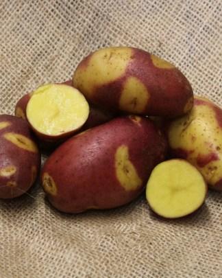 Mayan Twlight seed potatoes