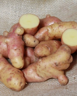 Pink Fir Apple Seed Potato