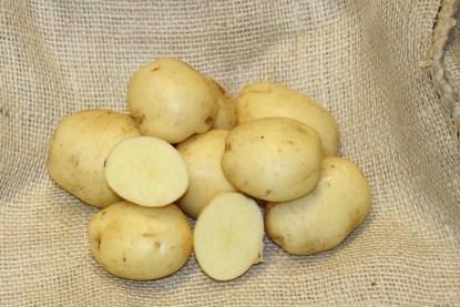 sante seed potatoes