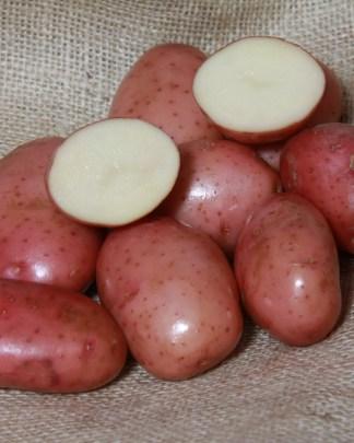 Sarpo Mira Seed Potato