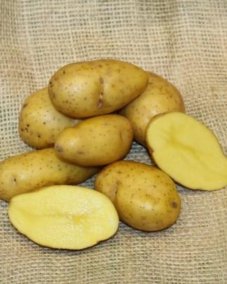 Scapa Seed Potatoes