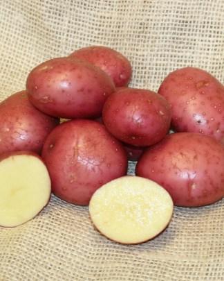 Setanta Seed potatoes