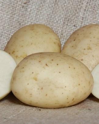 Valor Seed Potatoes
