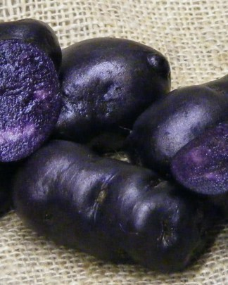 Vitelotte Seed Potatoes