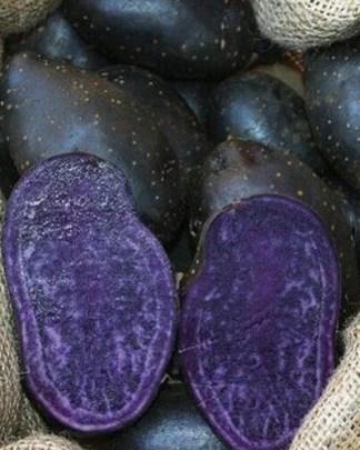 Blue Annelise seed potato