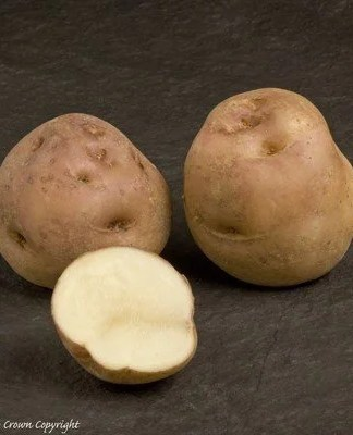 Epicure Seed Potatoes