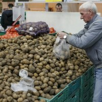 Report: Current and future trends in the Ukrainian potato market