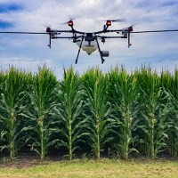 Live Webinar: Minimize in-field damage from disease by drone spraying