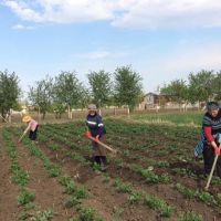A lesson in compassion: In Georgia, women potato farmers show solidarity and empathy amid COVID-19