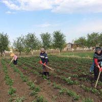 A lesson in compassion: In Georgia, women potato farmers show solidarity and empathy amid COVID-19