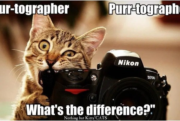 Funny-Cat-Photographer