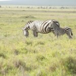 Travel: Lewa Conservancy in Pictures