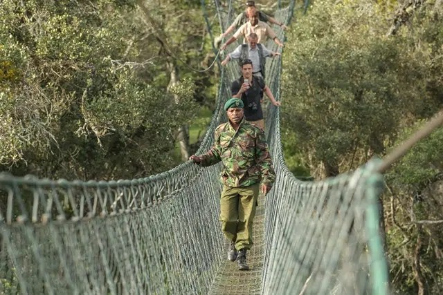 Ibrahim Maina,a guard at Ngare Ndare forest takes Travel Writer John Fox and sons through Ngare Ndare Canopy walkway. Image courtesy of Safaricom