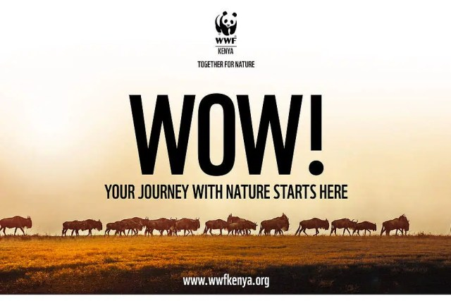 WWF Kenya has relaunched. Image from http://wwf.panda.org/who_we_are/wwf_offices/kenya/