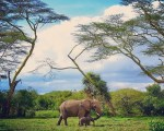 Simple Ways We Can Be Involved In Wildlife Conservation