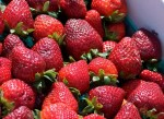 Urban Farming: Here Is How To Grow Organic Strawberries In Your Backyard And Keep On Harvesting For Up To Three Years