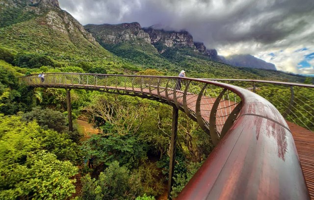 Kirstenbosch Gardens - Canopy Walkway - Cape Town - Outdoors
