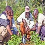 Agriculture: How Soil Testing Can Transform Small Scale Farming In Kenya