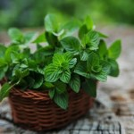 9 Health Benefits Of Mint That You May Not Know About