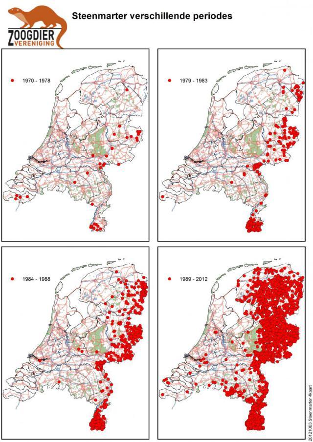 Verspreiding van de steenmarter in Nederland