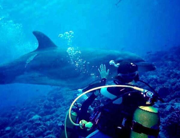 La vidéo du jour #01/02/13 : Un dauphin demande de l'aide à un plongeur !