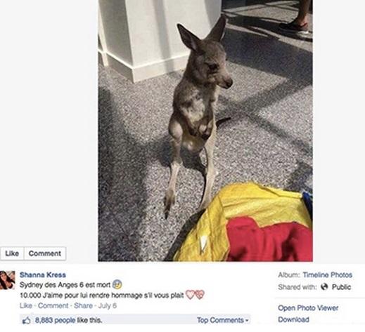 Facebook Shanna