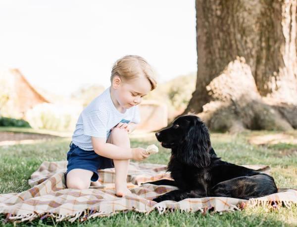 Le prince George a 3 ans : Toujours plus craquant sur ses nouvelles photos officielles