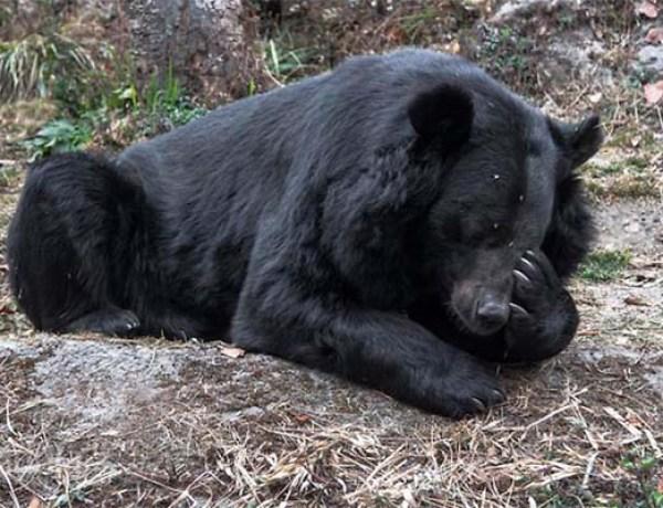 Chine : Une propriétaire croyait avoir acheté un chiot, c'était un ours