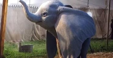 Première bande-annonce pour Dumbo, le remake de Disney