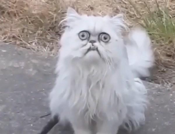 Buzz : Découvrez Wilfried, le chat le plus laid d'Internet